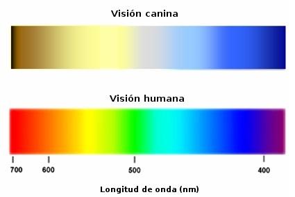 VISION CANINA Y HUMANA